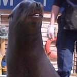 Sea lion smiling for us .. Highlight of the trip .. Xx