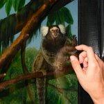 Face to face with a curious tamarin