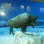 State Museum of Pennsylvania - Wildlife