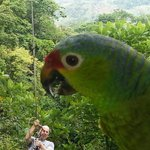 Watch out for the giant parrot! ... ha