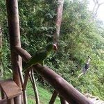 Tarzan swing and spectator