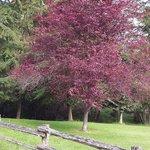 Tree on property (I love trees)