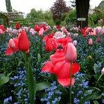 Flores no Jardim de Monet