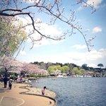桜が見事な遊歩道