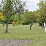 Garden picture, with fruit trees