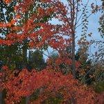 Outono em Mendoza é lindo !!!