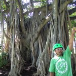 Pono explaining the history of the Banyan tree