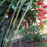 One of the many exotic plants in the garden