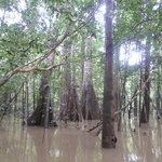 The jungle during the wet season
