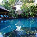 Wunderschöner Pool inmitten eines grünen Gartens