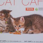 Katzen Heim im Hotel