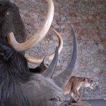 Musee de Prehistoire des gorges du Verdon