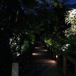 Foresta pluviale di notte