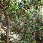Aviary: blue-sheened bird