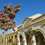 Flowering tree outside market