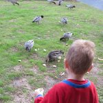 Feeding ducks from just outside room
