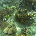 Nemo (100metre from beach at Coco)