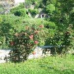 Klio's well-kept garden