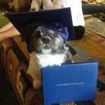 Teddy goes to graduation party at Black Bear Inn Suite