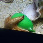 Little starfish cuddling its teddy