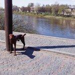 Вид на реку Вологда