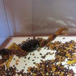 Amber crab
