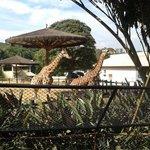 coisas mais fofas as girafas