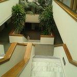 roślinność wewnątrz hotelu