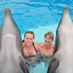 we went and swam with the dolphins worth the trip but check out prices first