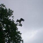 Cicogna in volo