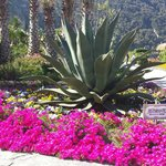 Giardini di Poseidon maggio 2014