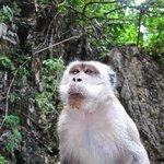 Os macacos estão por toda a parte