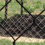 Kangaroos depressed