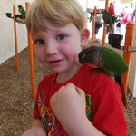 My son feeding a parrot on his shoulder