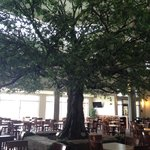 Breakfast area around the pretty tree
