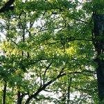 Gorgeous trees everywhere
