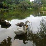 Lago no Parcão