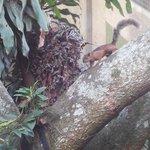 Les écureuils au petit déjeuner