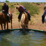 thirsty horse