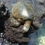 How cool is this!!! Turtles just hanging out relaxing, like us!