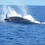 Whale watching was amazing!!!