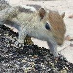 The squirrels in the garden