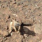 Écureuil sauvage !