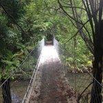 Pont au dessus de la Hidden River
