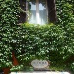 hedera - entrata con edera