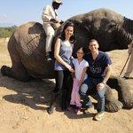 Interação com elefante