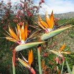Birds of Paradise in the Botanical Park