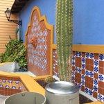 Cactus feature