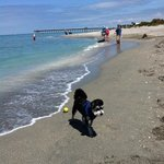 best dog beach..