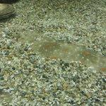 poisson plat de l'aquarium